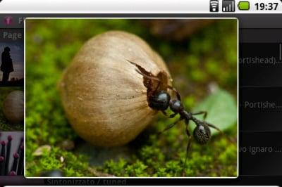 better flickr (3)