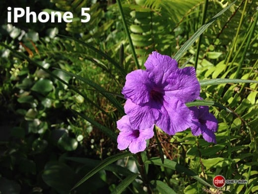 iphone_flower_sc