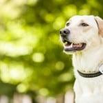 Photo-pet-tracker