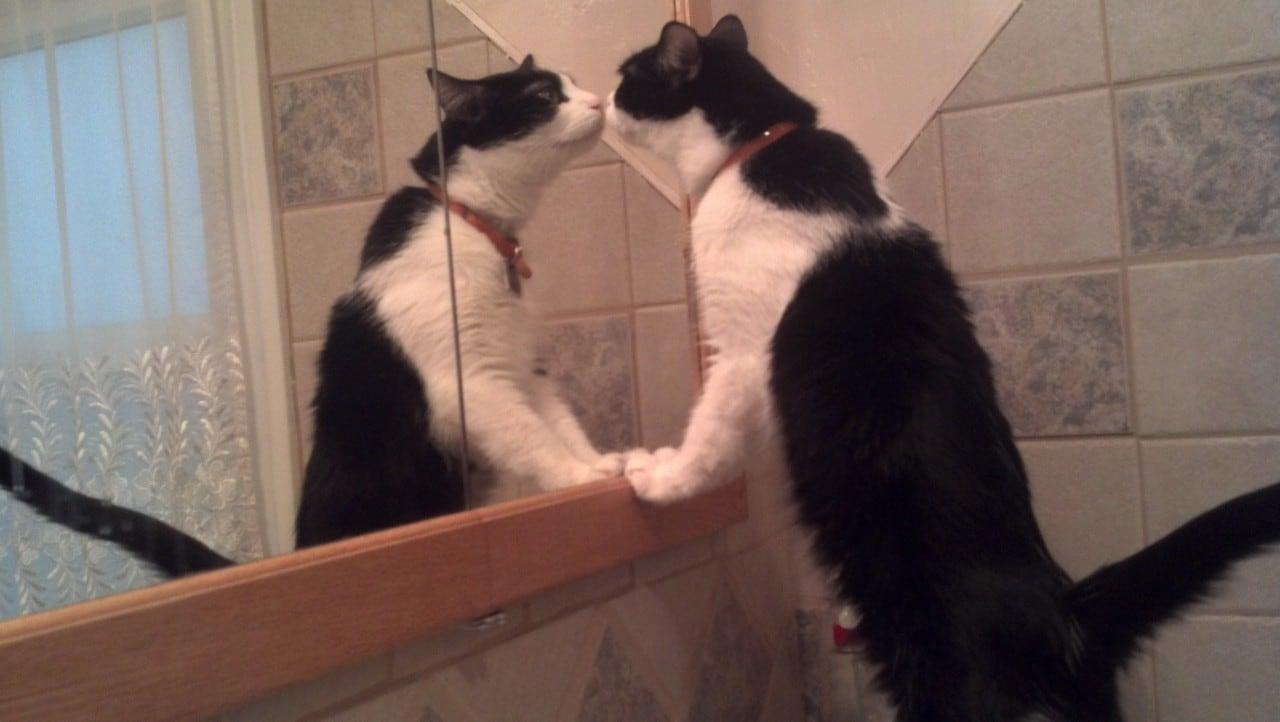 specchio gatto