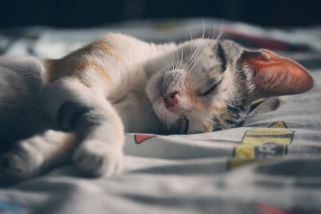 dormire-final