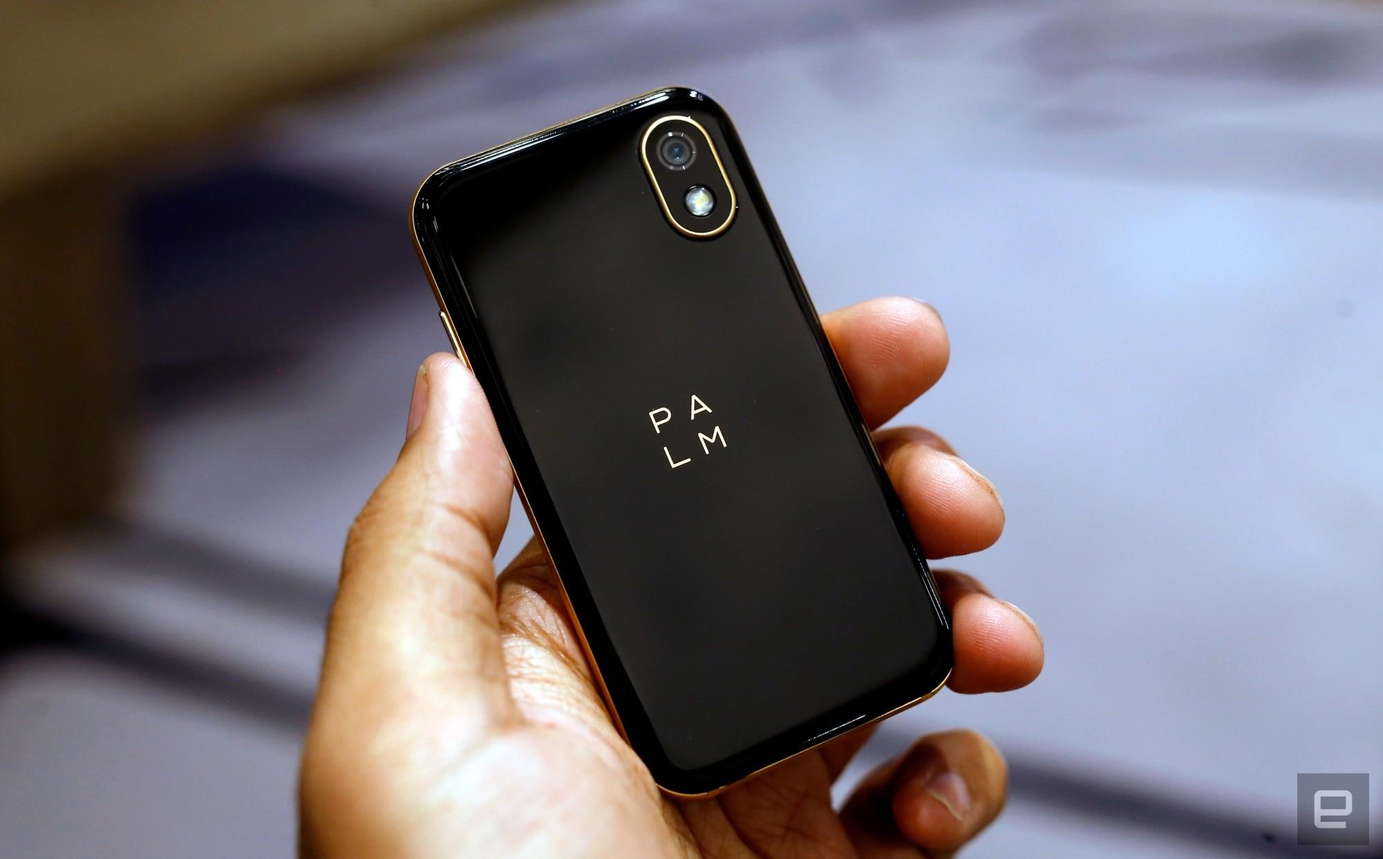 palm 2018 (11)