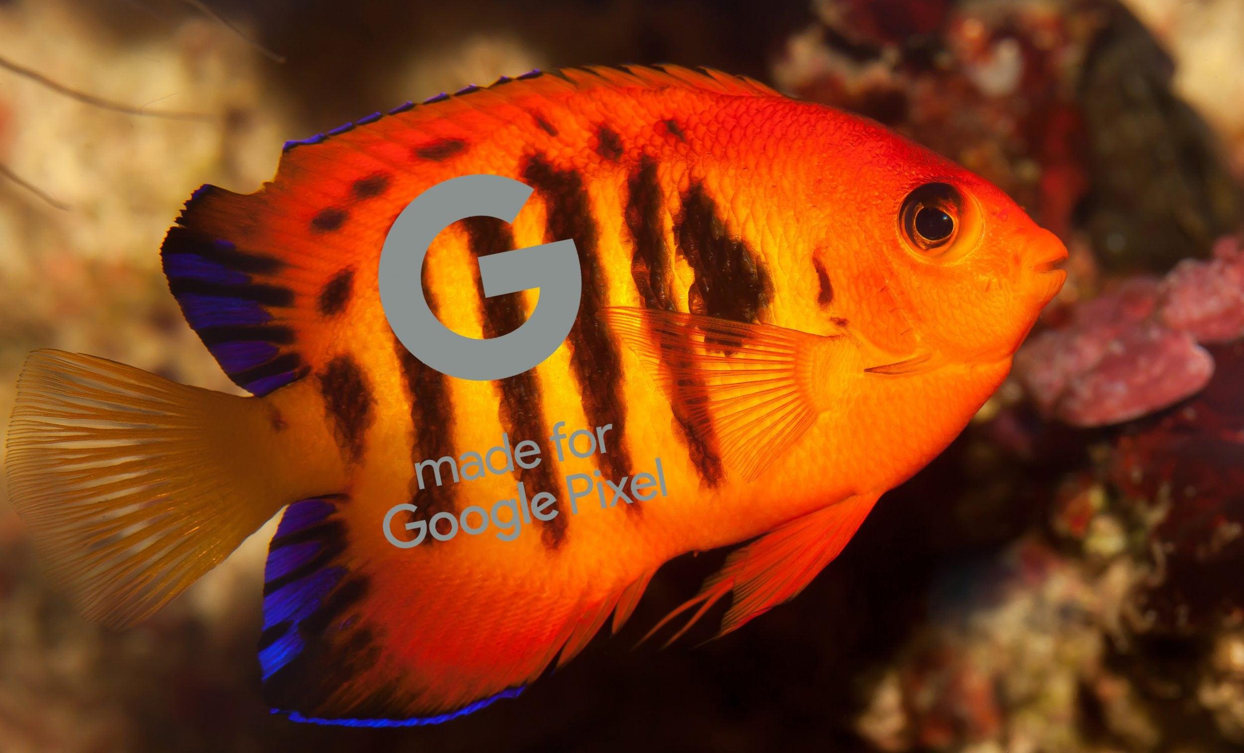 Corallo e Pesce Angelo Fiamma sono i nomi in codice di Google Pixel 4 e Pixel 4 XL