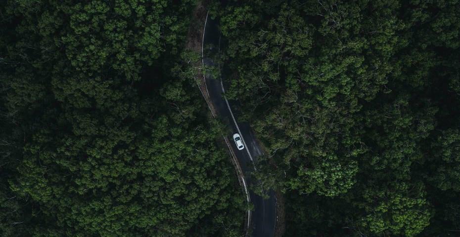 wallpaper_forest